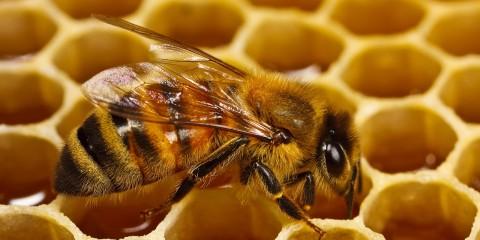 .8-B.  Lori Has Hives