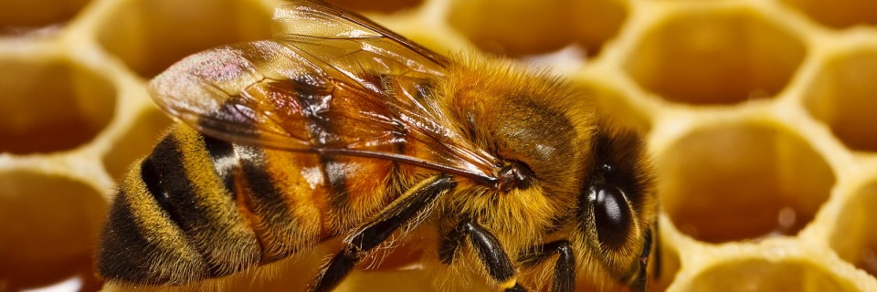 03d. Lori Has Hives